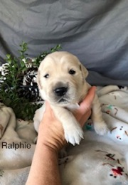 Ralfie
