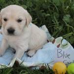 blue-girl-4w