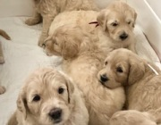 calli pups all