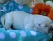 PuppyFind.com,783318