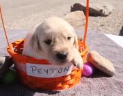 peyton 010