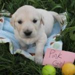 pink-girl-4wk