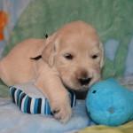 pup pics 9-29-14 007