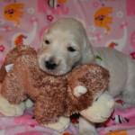pup pics 9-29-14 056