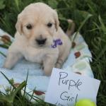 purple-girl-4wk