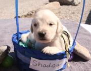 shadow 005