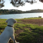 shilos first look at water and ducks